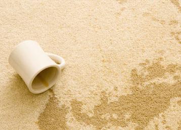 Carpet Cleanup MA