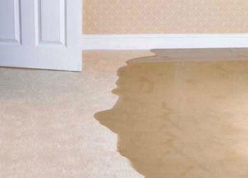 Soaked Carpet MA