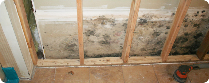 mold cleanup Wenham MA