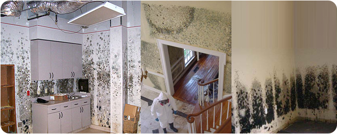 mold damage cleanup Middleton MA